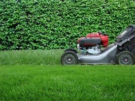 Communique ilak - Comment avoir un beau jardin ...